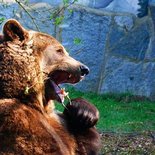 Zum Tierpark Bischofswerda