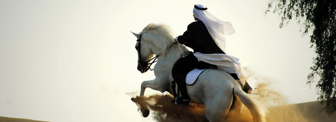 Geschichte Araberpferde