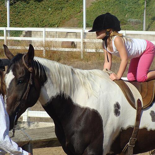 Therapiestunde Pferd
