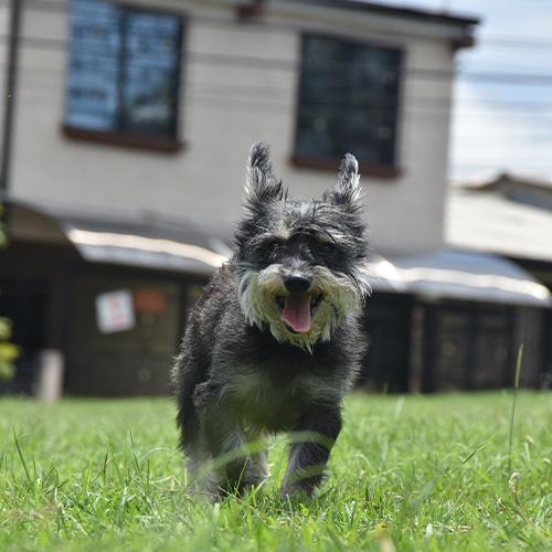 Hund rennt im Garten herum