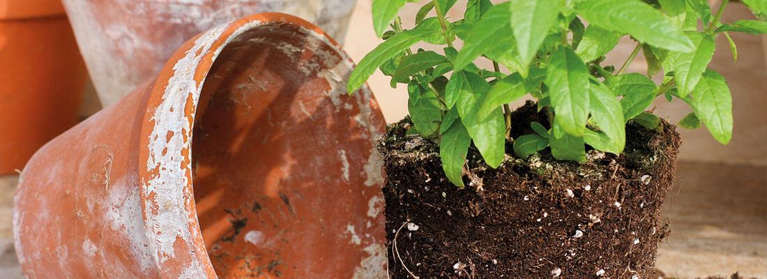 Hochwertige Pflanzerde