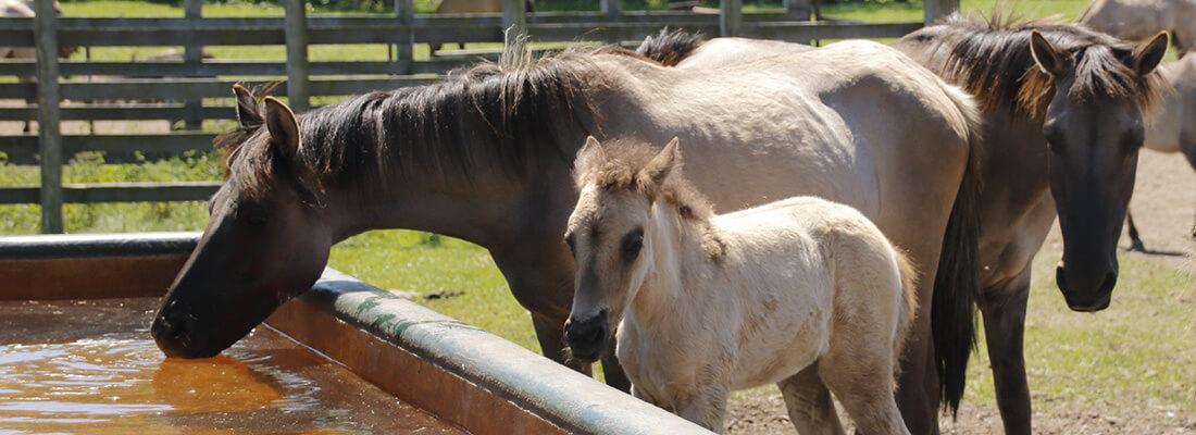Aktivstall für Pferde
