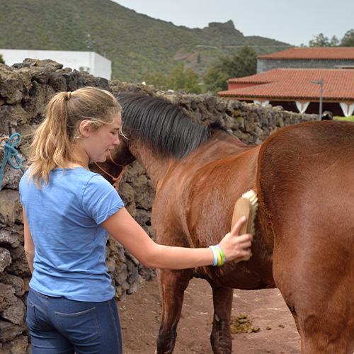 Pferde putzen Grobreinigung