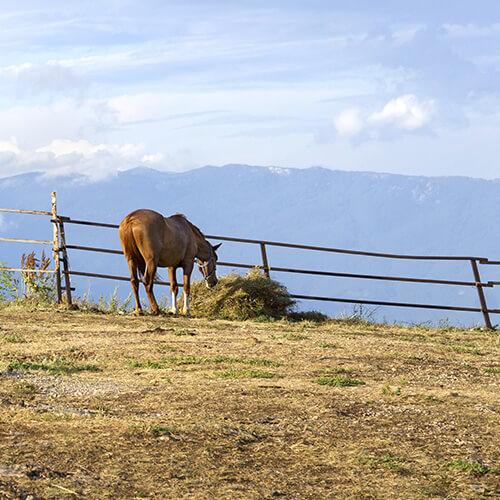 Bergwiesenheu Pferde