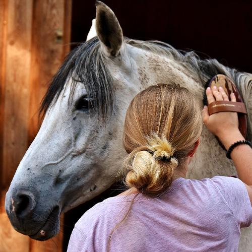 Pferde putzen lose Haare entfernen