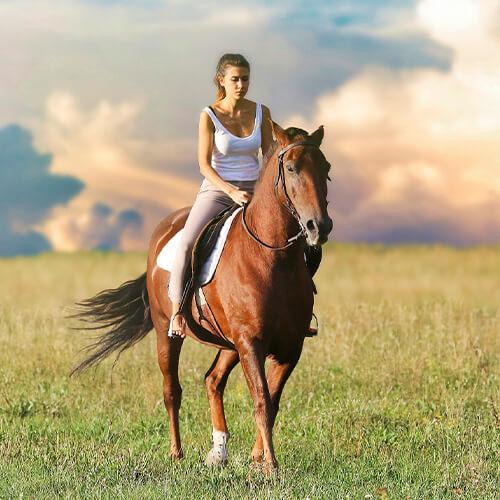 Pferdewirt Reiterausbildung