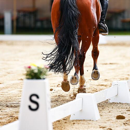 Paddockmatten für Pferde