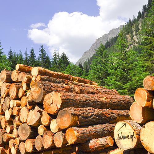 Freilufttrocknung Brennholz
