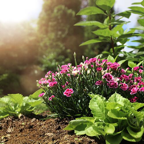 Regenwurmhumus für kräftige Pflanzen