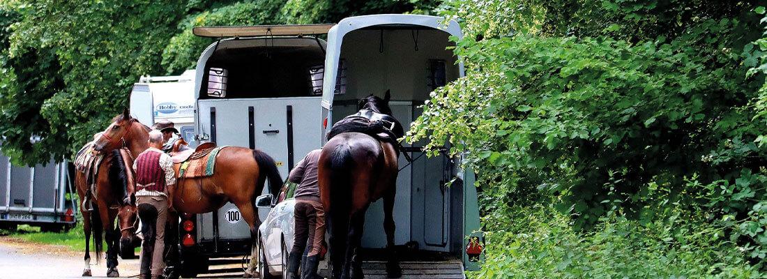 Pferdetransport Pferde