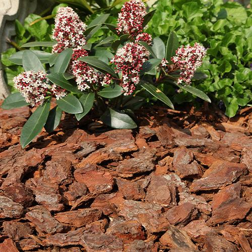 Pinienrinde Grob im Garten