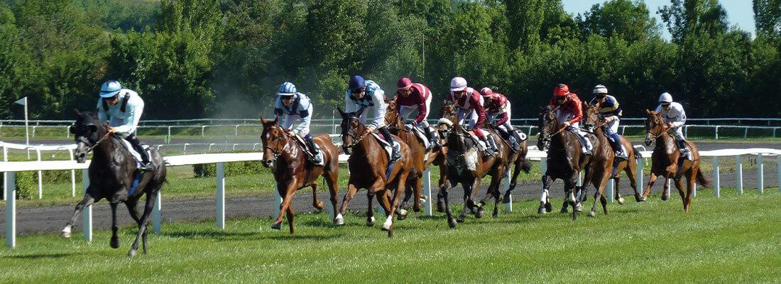 Pferdewirt Pferderennen