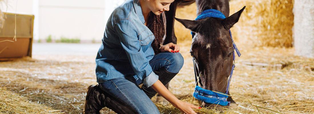 Ernährung Pferde