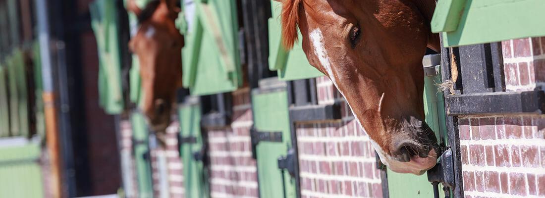 Pferdeintelligenz