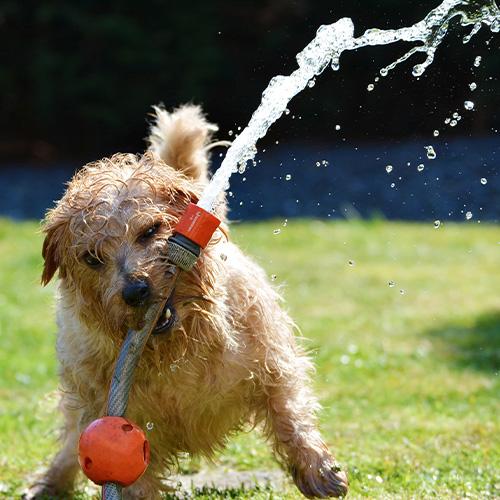 Erfrischung für Hunde