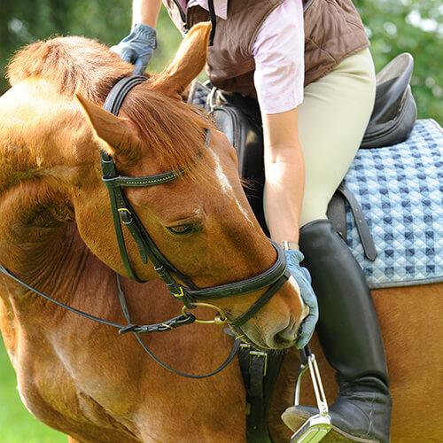 Reiter und Pferd