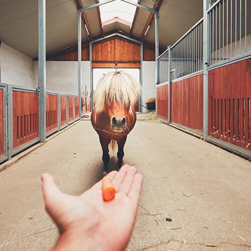 Leckerli für Pferde