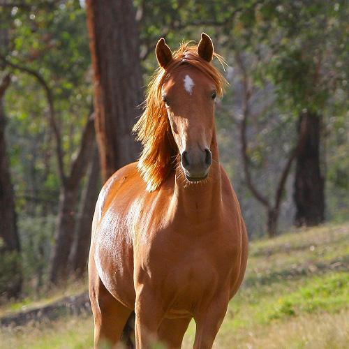 Salzleckstein für Pferde