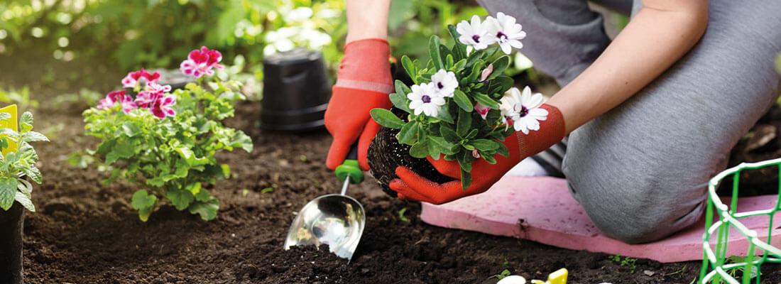 Pflanzen richtig umsetzen