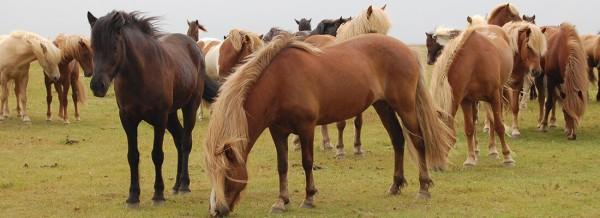 Pferdefarben-fullsize-1100px