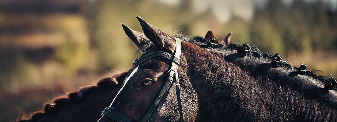Einstreu für Pferde