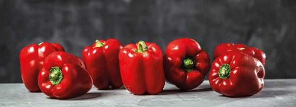 Paprika-Tomate-fullsize1