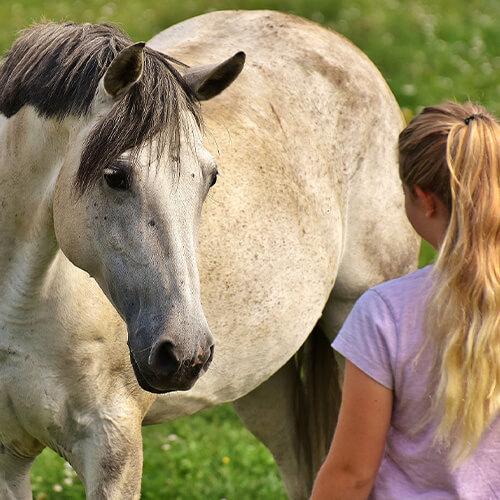 Leben als Therapie Pferd