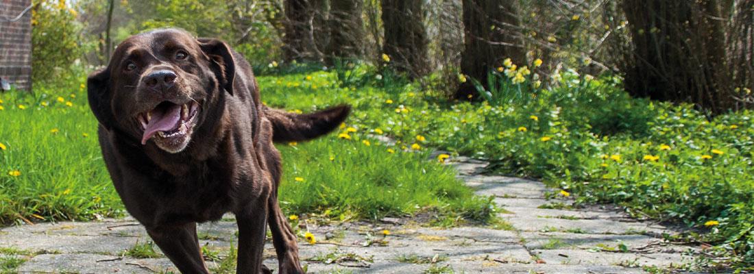 Hunde spielt im Garten