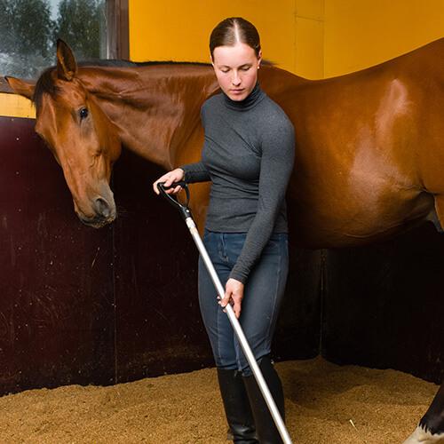 Pferdewirt Tierpflege