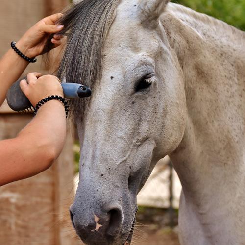 Pferde putzen Mähne