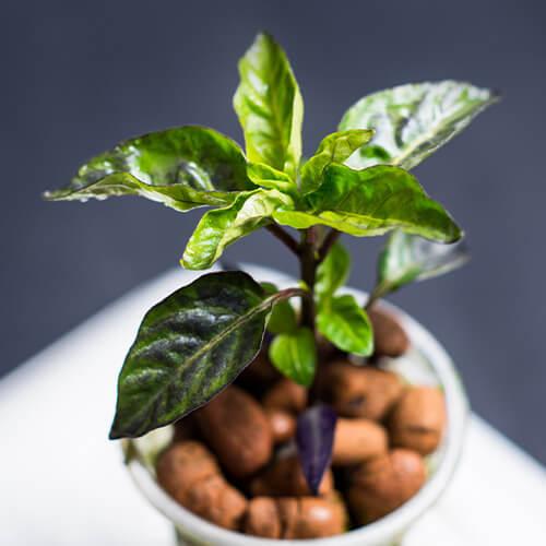 Blähton für die Pflanzenwelt