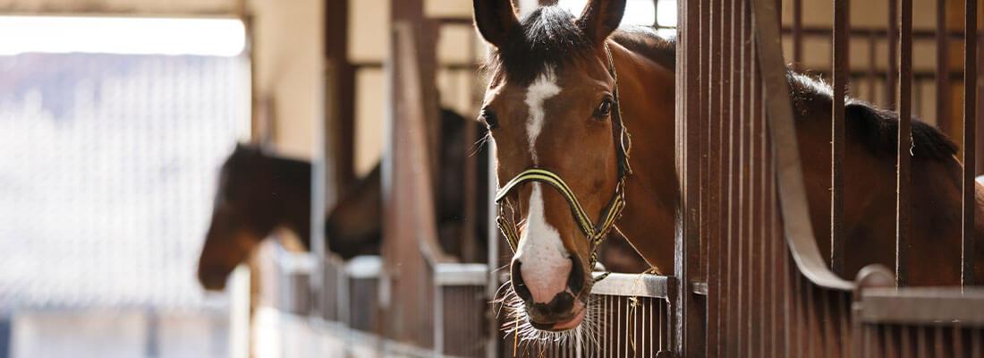 Stallgebäude Pferd