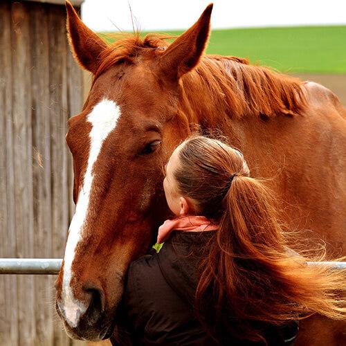 Zugneigung zum Pferd