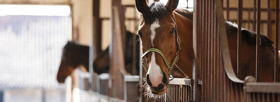 Pferde im Alter Stallhaltung