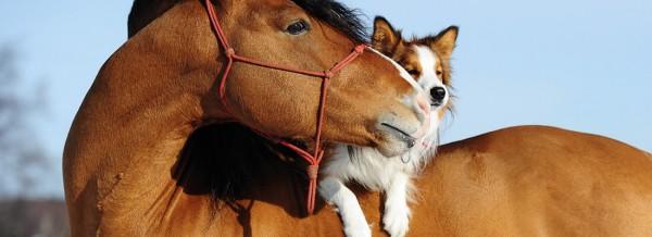 Pferd-Hunde-fullsize-1100px