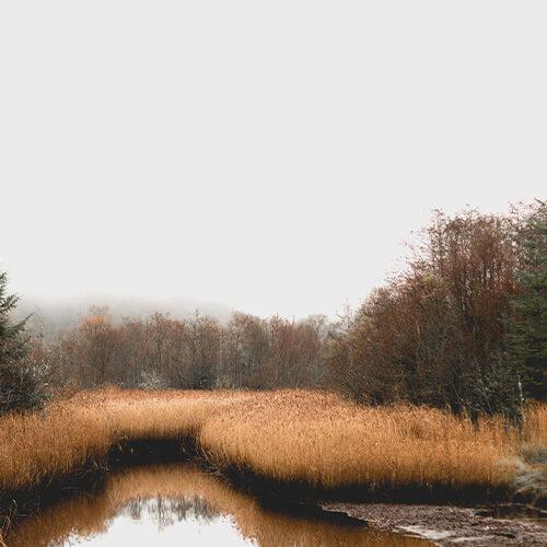 Natürlicher Moor